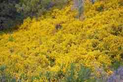 gele-bloemen-bariloche