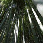 Bamboebos in Arashiyama