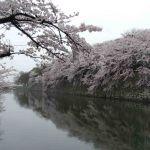 Kersenbloesem bij Hakone castle