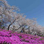 Kersenbloesem bij Mount Fuji