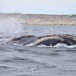 Walvis spotten bij Puerto Madryn
