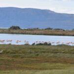 Flamingo's bij Laguna Nimez reserve (bij El Calafate)