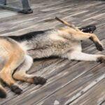 Speelse hond in Bariloche