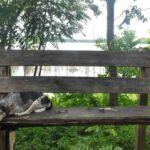 Slapende hond in El Remate