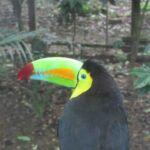 Macaw bird center in Copan