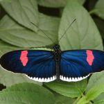 Vlindertuin in Mindo