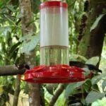 Kolibrie in Mindo