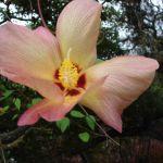 Plant op een van de Galapagos eilanden