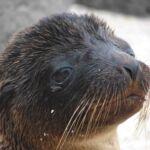 Zielig kijkende zeehond