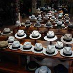 Panamahouden in Cuenca