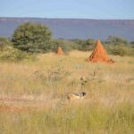 Termietenheuvel in little Serengeti - Waterberg
